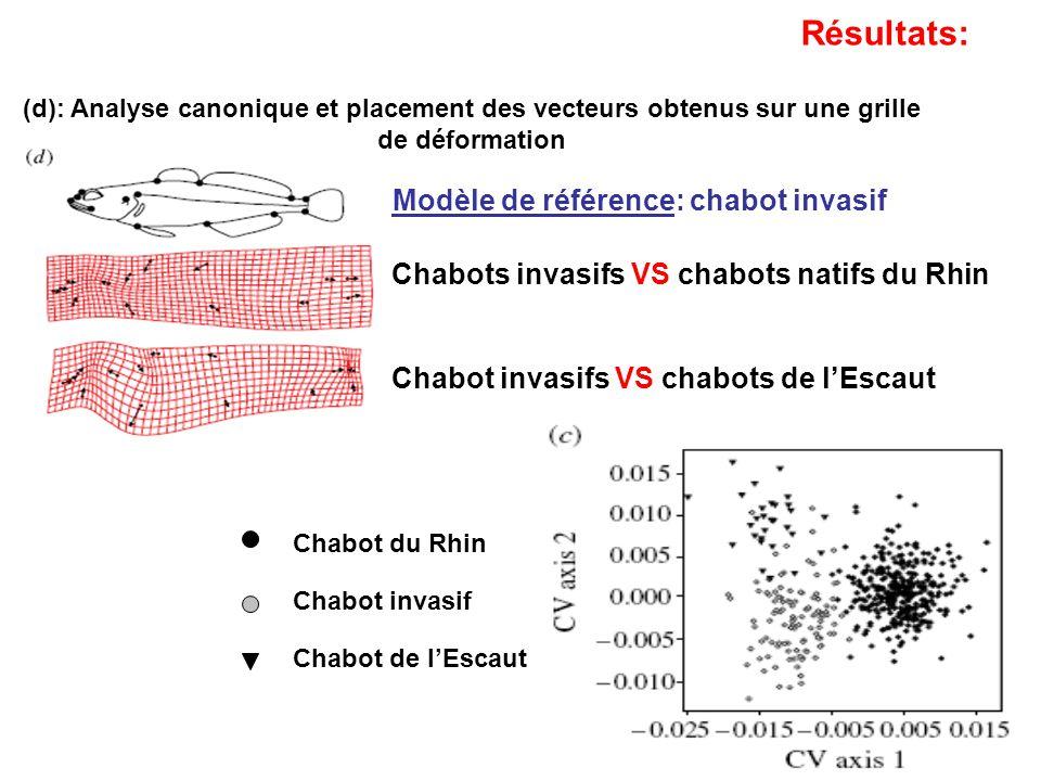 Chabots invasifs VS chabots natifs du Rhin Chabot invasifs VS chabots de lEscaut Résultats: (d): Analyse canonique et placement des vecteurs obtenus s