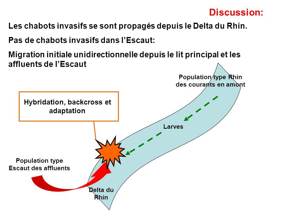 Les chabots invasifs se sont propagés depuis le Delta du Rhin. Pas de chabots invasifs dans lEscaut: Migration initiale unidirectionnelle depuis le li