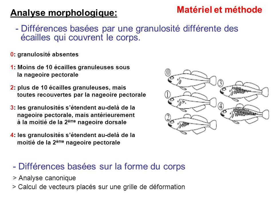 Analyse morphologique: - Différences basées par une granulosité différente des écailles qui couvrent le corps. 0: granulosité absentes 1: Moins de 10