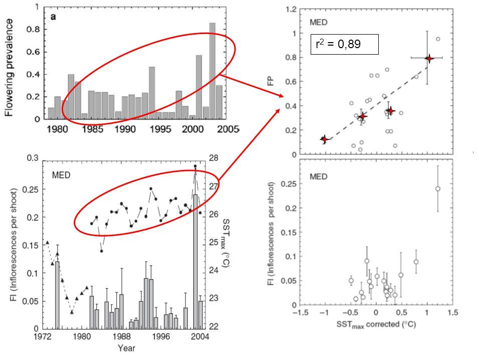 Phénomène cyclique présentant un rythme de 10 ans Corrélation entre FP et SST max (°C)