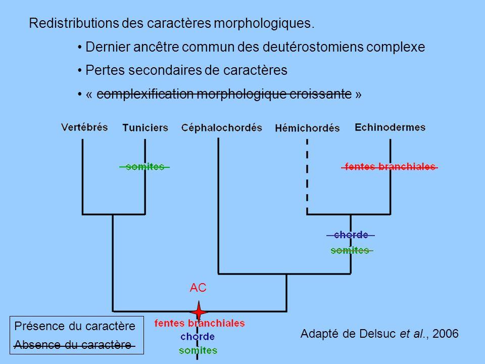 Redistributions des caractères morphologiques. Dernier ancêtre commun des deutérostomiens complexe Pertes secondaires de caractères « complexification