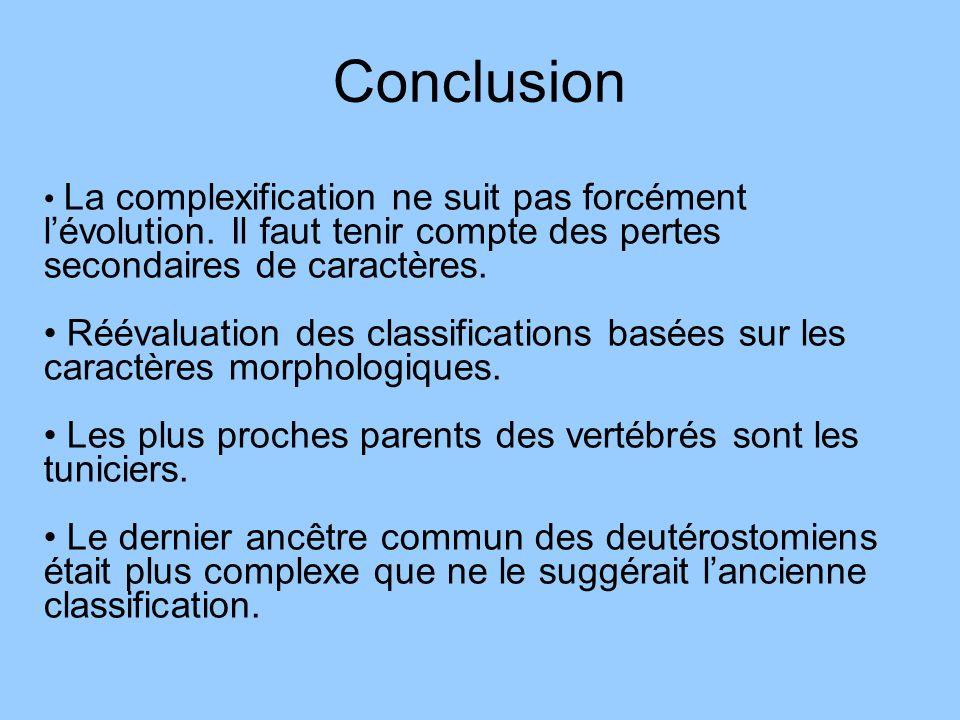 Conclusion La complexification ne suit pas forcément lévolution. Il faut tenir compte des pertes secondaires de caractères. Réévaluation des classific