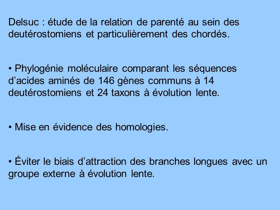 Delsuc : étude de la relation de parenté au sein des deutérostomiens et particulièrement des chordés. Phylogénie moléculaire comparant les séquences d