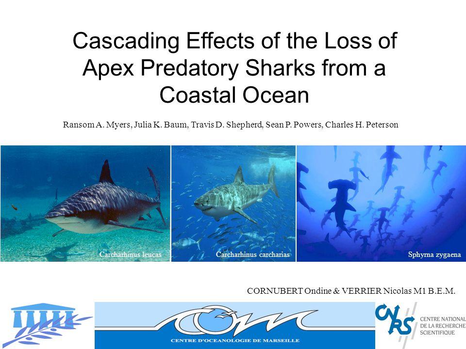 Déstructuration top-down par effet cascade : Ecosystème contrôlé Top-down : Elimination fonctionnelle des apex prédateurs due à la pêche.
