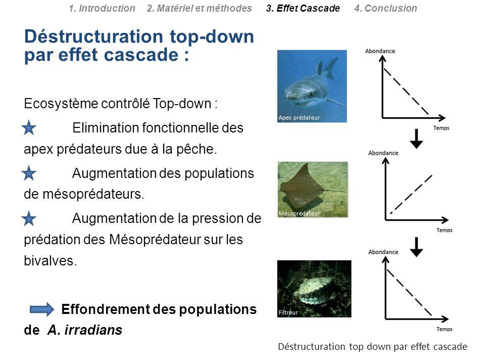 Déstructuration top-down par effet cascade : Ecosystème contrôlé Top-down : Elimination fonctionnelle des apex prédateurs due à la pêche. Augmentation