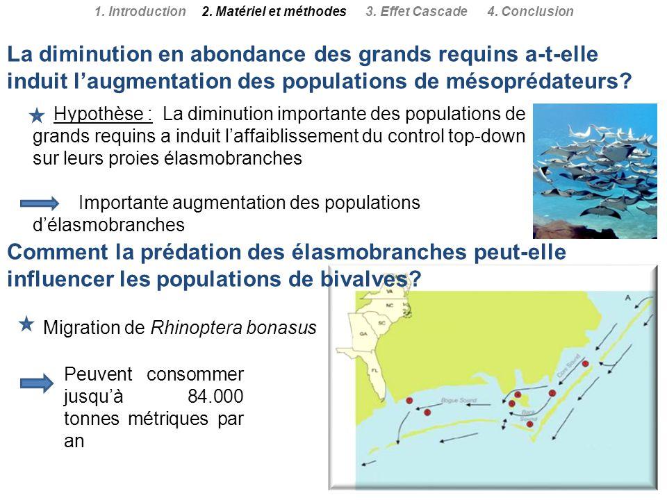 Hypothèse : La diminution importante des populations de grands requins a induit laffaiblissement du control top-down sur leurs proies élasmobranches I
