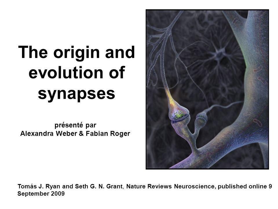 The origin and evolution of synapses Tomás J. Ryan and Seth G. N. Grant, Nature Reviews Neuroscience, published online 9 September 2009 présenté par A