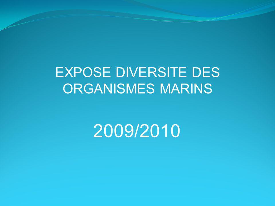 EXPOSE DIVERSITE DES ORGANISMES MARINS 2009/2010