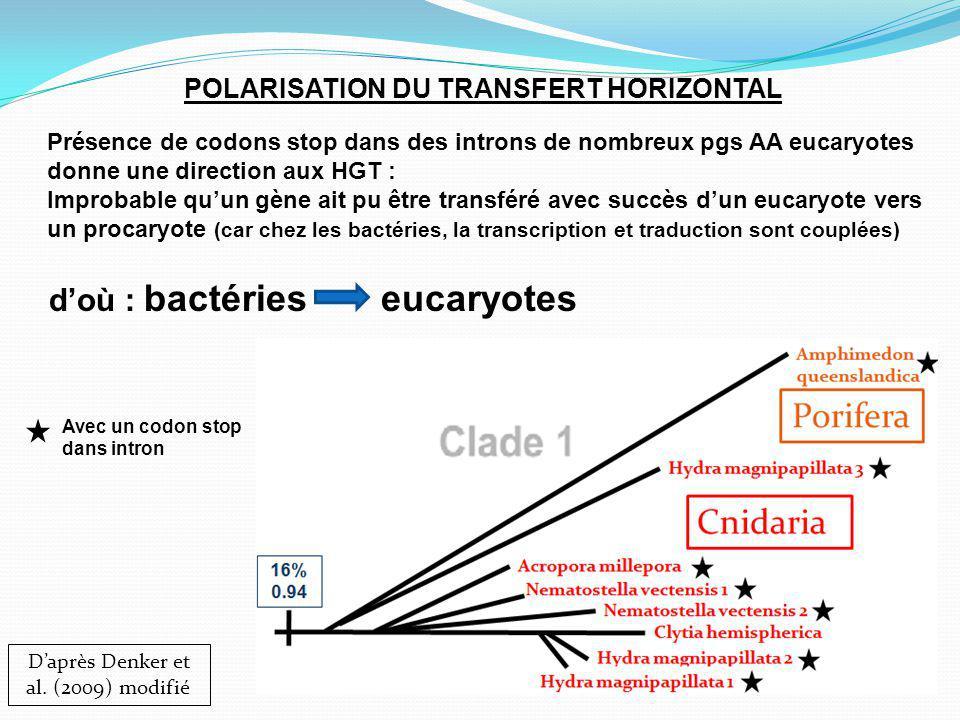POLARISATION DU TRANSFERT HORIZONTAL Daprès Denker et al.