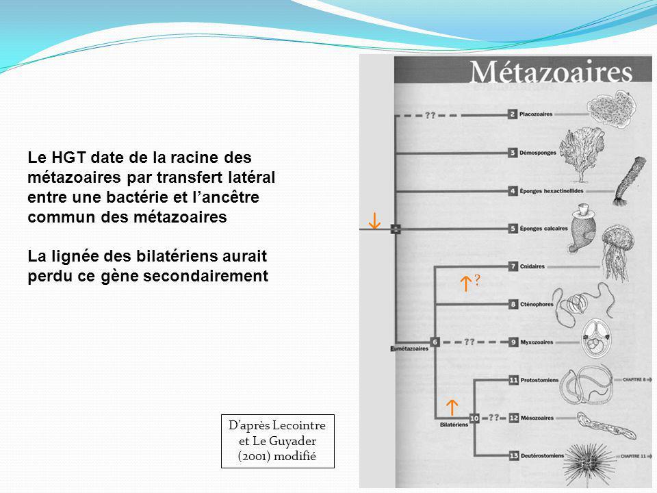 Le HGT date de la racine des métazoaires par transfert latéral entre une bactérie et lancêtre commun des métazoaires La lignée des bilatériens aurait perdu ce gène secondairement Daprès Lecointre et Le Guyader (2001) modifié ?
