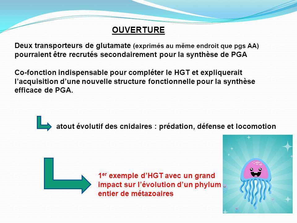 1 er exemple dHGT avec un grand impact sur lévolution dun phylum entier de métazoaires atout évolutif des cnidaires : prédation, défense et locomotion Deux transporteurs de glutamate (exprimés au même endroit que pgs AA) pourraient être recrutés secondairement pour la synthèse de PGA Co-fonction indispensable pour compléter le HGT et expliquerait lacquisition dune nouvelle structure fonctionnelle pour la synthèse efficace de PGA.