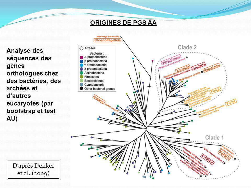 ORIGINES DE PGS AA Daprès Denker et al.