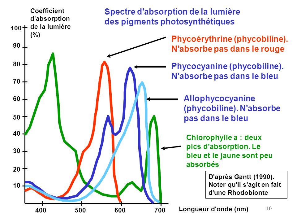 10 Coefficient d absorption de la lumière (%) Longueur d onde (nm) 100 90 80 70 60 50 40 30 20 10 400700500600 Spectre d absorption de la lumière des pigments photosynthétiques Chlorophylle a : deux pics d absorption.