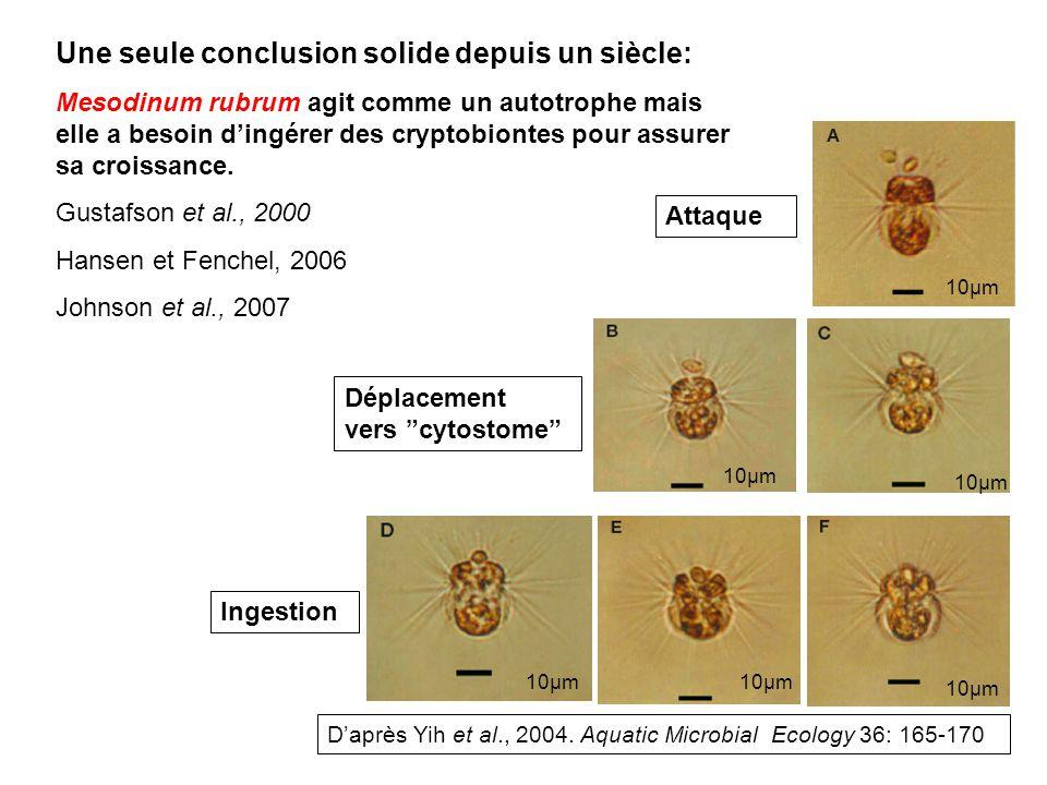 Attaque Déplacement vers cytostome Ingestion Daprès Yih et al., 2004. Aquatic Microbial Ecology 36: 165-170 Une seule conclusion solide depuis un sièc