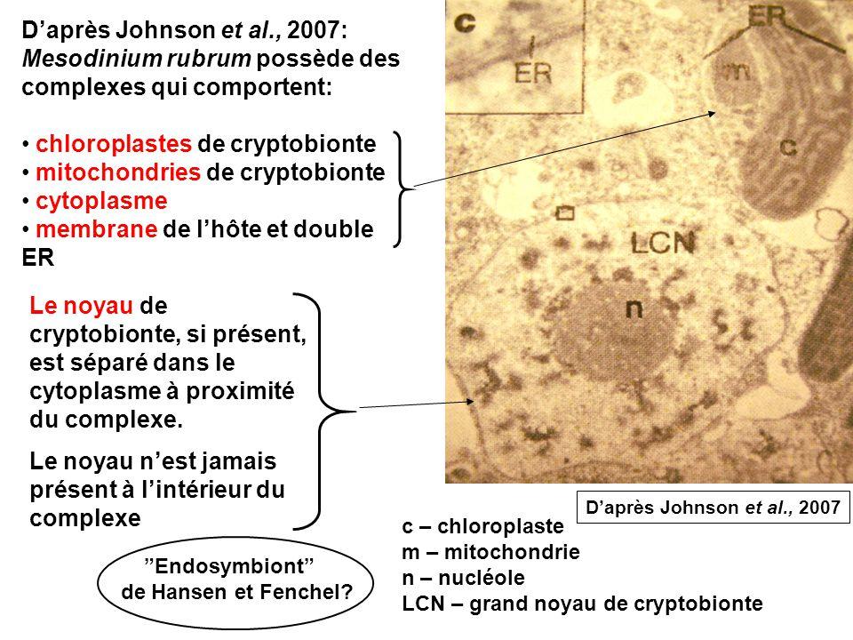 Daprès Johnson et al., 2007: Mesodinium rubrum possède des complexes qui comportent: chloroplastes de cryptobionte mitochondries de cryptobionte cytoplasme membrane de lhôte et double ER c – chloroplaste m – mitochondrie n – nucléole LCN – grand noyau de cryptobionte Le noyau de cryptobionte, si présent, est séparé dans le cytoplasme à proximité du complexe.