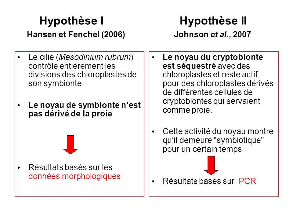 Hypothèse I Hypothèse II Hansen et Fenchel (2006) Johnson et al., 2007 Le cilié (Mesodinium rubrum) contrôle entièrement les divisions des chloroplastes de son symbionte Le noyau de symbionte nest pas dérivé de la proie Résultats basés sur les données morphologiques Le noyau du cryptobionte est séquestré avec des chloroplastes et reste actif pour des chloroplastes dérivés de différentes cellules de cryptobiontes qui servaient comme proie.