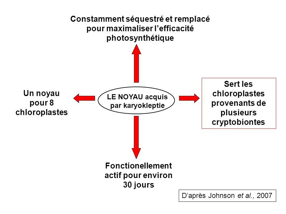 LE NOYAU acquis par karyokleptie Un noyau pour 8 chloroplastes Fonctionellement actif pour environ 30 jours Sert les chloroplastes provenants de plusieurs cryptobiontes Constamment séquestré et remplacé pour maximaliser lefficacité photosynthétique Daprès Johnson et al., 2007