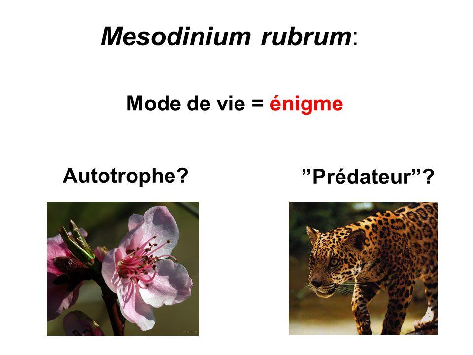 Mesodinium rubrum: Mode de vie = énigme Autotrophe? Prédateur?