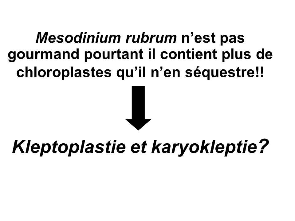 Mesodinium rubrum nest pas gourmand pourtant il contient plus de chloroplastes quil nen séquestre!! Kleptoplastie et karyokleptie ?