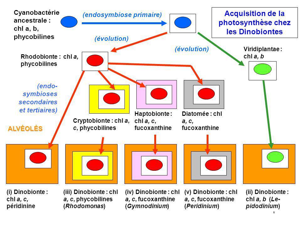 2 Cytologie dun des types de Dinobiontes photosynthétiques Noyau géant ADN euca- ryotique.