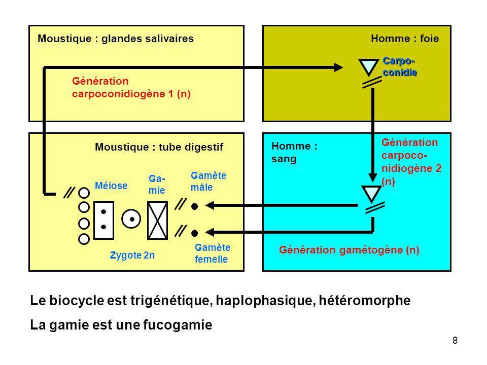 Micronoyau Alvéole Macro- noyau Vacuole digestive Ribosome eucaryotique 80S CytopharynxCytostome (bouche cellulaire) Cirre (cils agglutinés) Mitochon- drie avec crêtes tubulaires Ribosome procaryotique Vacuole pulsatile ADN procaryotique Cils organisés en cinéties Plasma- lemme Cyto- plasme Extrusome (trichocyste) Cytologie dun Cilié Daprès Boudouresque, sous presse