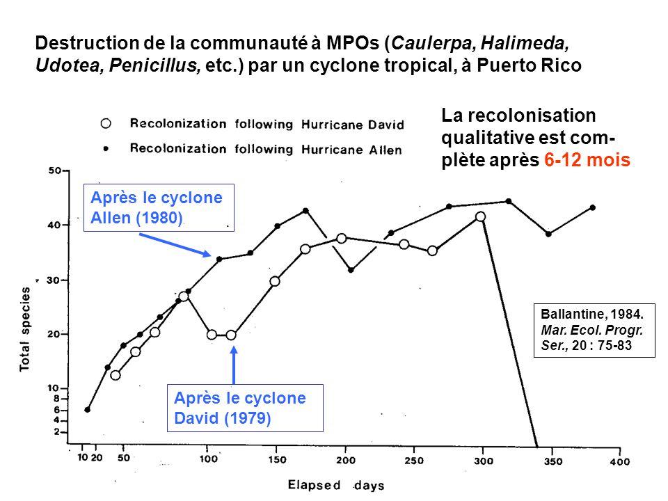 105 Destruction de la communauté à MPOs (Caulerpa, Halimeda, Udotea, Penicillus, etc.) par un cyclone tropical, à Puerto Rico Ballantine, 1984.