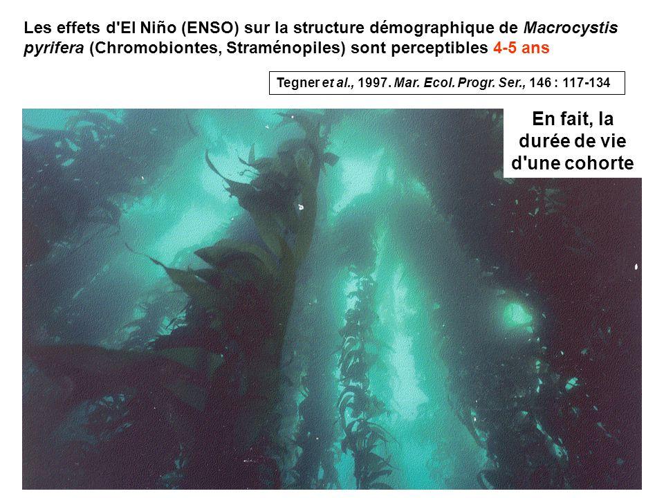 108 Les effets d El Niño (ENSO) sur la structure démographique de Macrocystis pyrifera (Chromobiontes, Straménopiles) sont perceptibles 4-5 ans En fait, la durée de vie d une cohorte Tegner et al., 1997.
