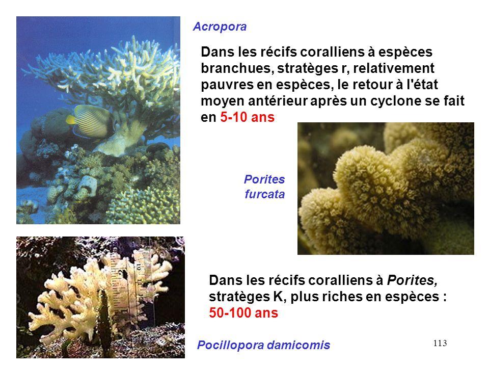 113 Acropora Pocillopora damicomis Dans les récifs coralliens à espèces branchues, stratèges r, relativement pauvres en espèces, le retour à l état moyen antérieur après un cyclone se fait en 5-10 ans Porites furcata Dans les récifs coralliens à Porites, stratèges K, plus riches en espèces : 50-100 ans