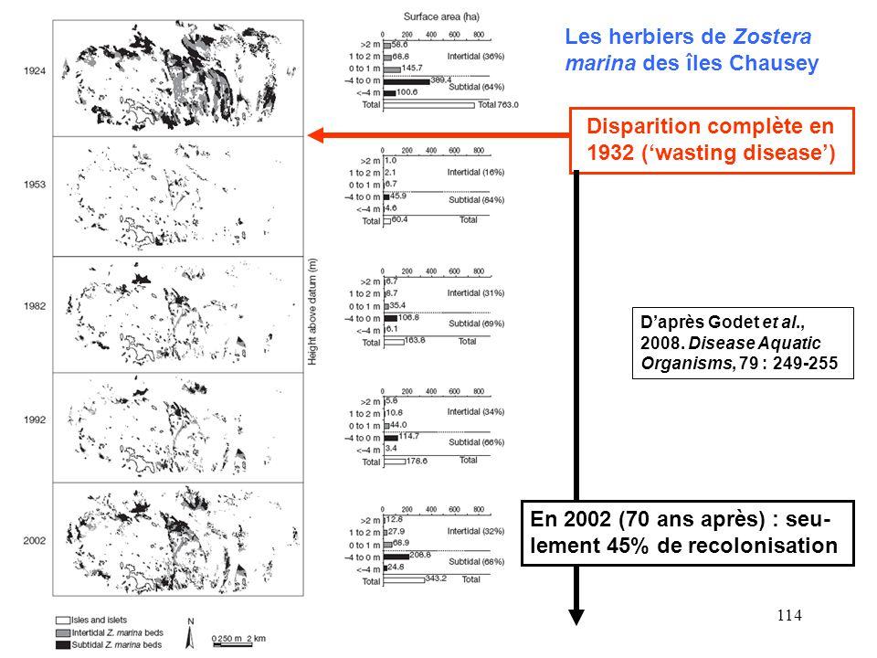 114 Les herbiers de Zostera marina des îles Chausey Disparition complète en 1932 (wasting disease) En 2002 (70 ans après) : seu- lement 45% de recolon