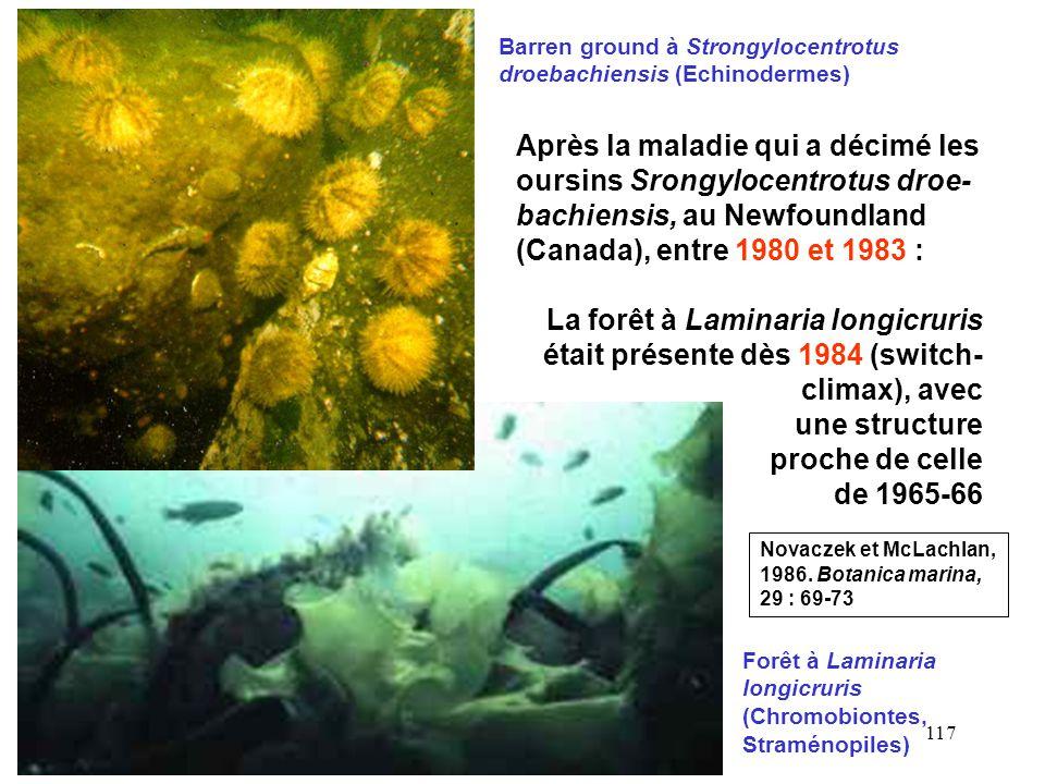 117 Forêt à Laminaria longicruris (Chromobiontes, Straménopiles) Barren ground à Strongylocentrotus droebachiensis (Echinodermes) Après la maladie qui a décimé les oursins Srongylocentrotus droe- bachiensis, au Newfoundland (Canada), entre 1980 et 1983 : La forêt à Laminaria longicruris était présente dès 1984 (switch- climax), avec une structure proche de celle de 1965-66 Novaczek et McLachlan, 1986.