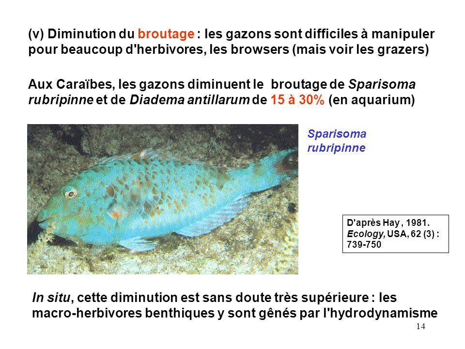 14 (v) Diminution du broutage : les gazons sont difficiles à manipuler pour beaucoup d herbivores, les browsers (mais voir les grazers) Aux Caraïbes, les gazons diminuent le broutage de Sparisoma rubripinne et de Diadema antillarum de 15 à 30% (en aquarium) Sparisoma rubripinne In situ, cette diminution est sans doute très supérieure : les macro-herbivores benthiques y sont gênés par l hydrodynamisme D après Hay, 1981.