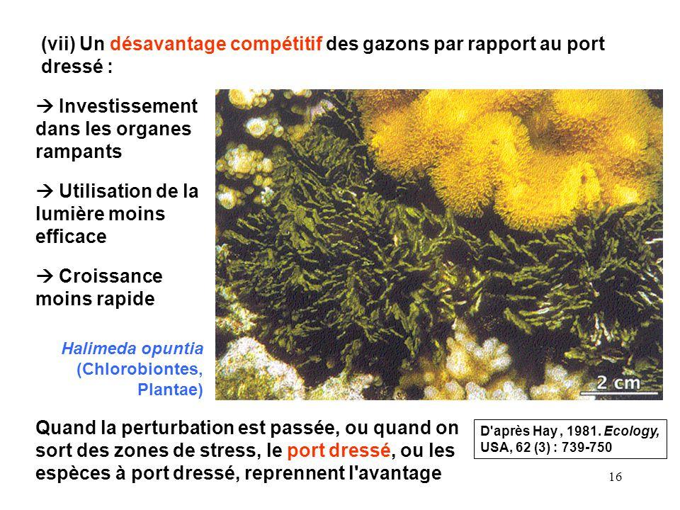 16 (vii) Un désavantage compétitif des gazons par rapport au port dressé : Investissement dans les organes rampants Utilisation de la lumière moins ef