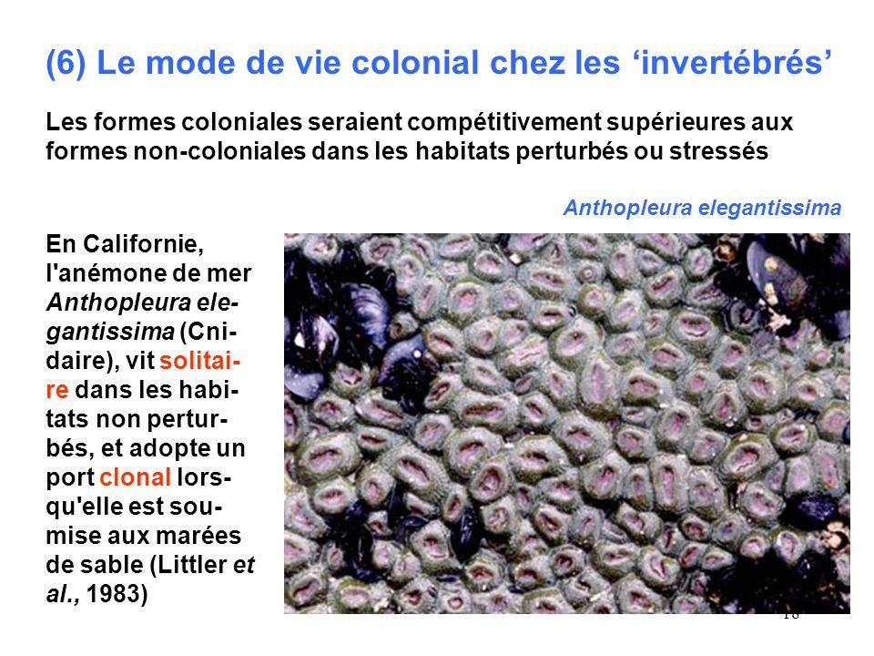 18 (6) Le mode de vie colonial chez les invertébrés Les formes coloniales seraient compétitivement supérieures aux formes non-coloniales dans les habitats perturbés ou stressés En Californie, l anémone de mer Anthopleura ele- gantissima (Cni- daire), vit solitai- re dans les habi- tats non pertur- bés, et adopte un port clonal lors- qu elle est sou- mise aux marées de sable (Littler et al., 1983) Anthopleura elegantissima