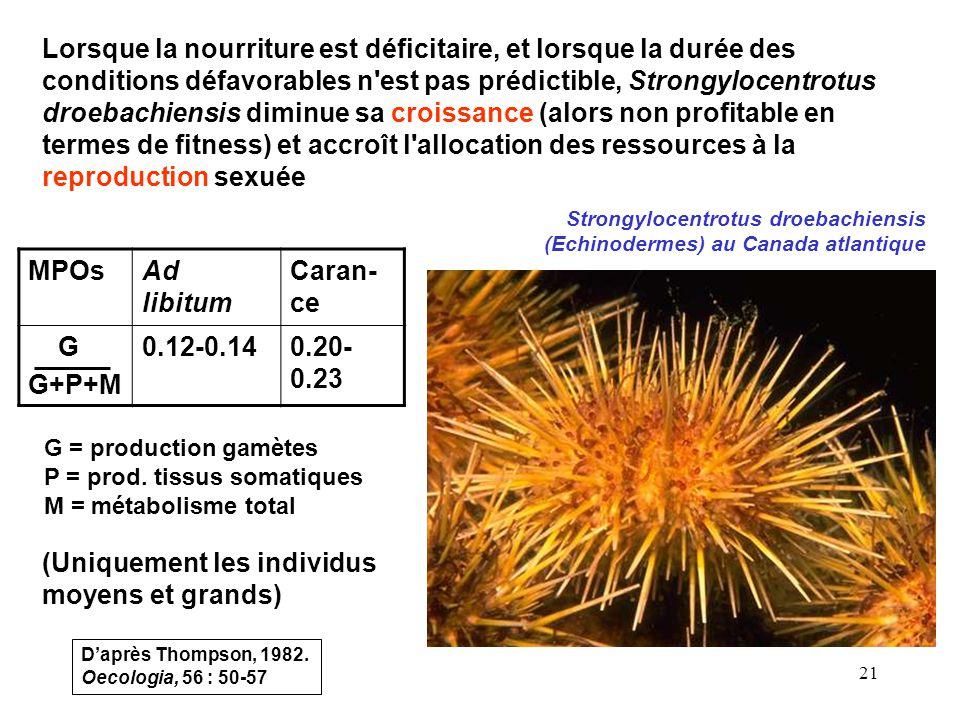 21 Lorsque la nourriture est déficitaire, et lorsque la durée des conditions défavorables n est pas prédictible, Strongylocentrotus droebachiensis diminue sa croissance (alors non profitable en termes de fitness) et accroît l allocation des ressources à la reproduction sexuée (Uniquement les individus moyens et grands) Strongylocentrotus droebachiensis (Echinodermes) au Canada atlantique MPOsAd libitum Caran- ce G G+P+M 0.12-0.140.20- 0.23 G = production gamètes P = prod.