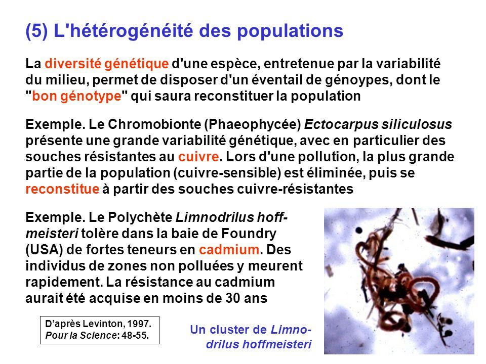 69 (5) L hétérogénéité des populations La diversité génétique d une espèce, entretenue par la variabilité du milieu, permet de disposer d un éventail de génoypes, dont le bon génotype qui saura reconstituer la population Exemple.
