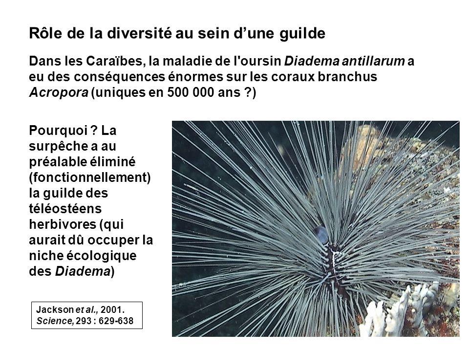 73 Rôle de la diversité au sein dune guilde Dans les Caraïbes, la maladie de l oursin Diadema antillarum a eu des conséquences énormes sur les coraux branchus Acropora (uniques en 500 000 ans ?) Pourquoi .