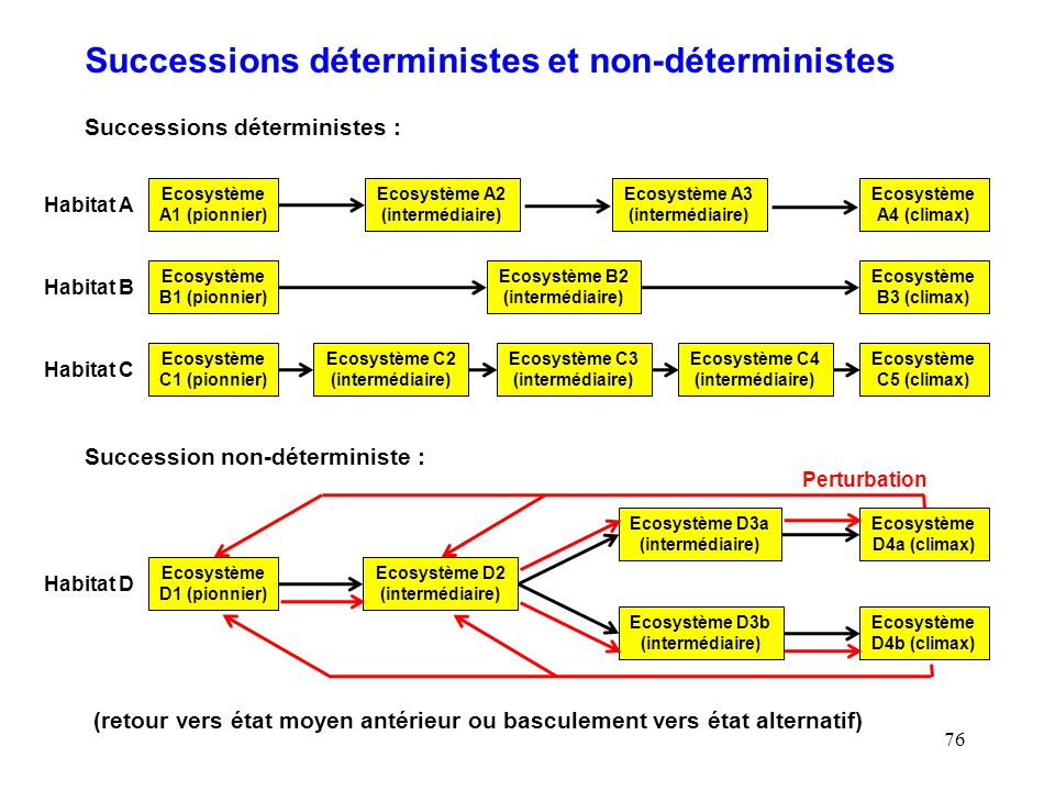 76 Successions déterministes et non-déterministes Ecosystème A1 (pionnier) Successions déterministes : Habitat A Ecosystème A2 (intermédiaire) Ecosystème A3 (intermédiaire) Ecosystème A4 (climax) Ecosystème B1 (pionnier) Habitat B Ecosystème B2 (intermédiaire) Ecosystème B3 (climax) Ecosystème C1 (pionnier) Habitat C Ecosystème C2 (intermédiaire) Ecosystème C3 (intermédiaire) Ecosystème C5 (climax) Ecosystème C4 (intermédiaire) Succession non-déterministe : Habitat D Ecosystème D1 (pionnier) Ecosystème D2 (intermédiaire) Ecosystème D3b (intermédiaire) Ecosystème D3a (intermédiaire) Ecosystème D4a (climax) Ecosystème D4b (climax) Perturbation (retour vers état moyen antérieur ou basculement vers état alternatif)