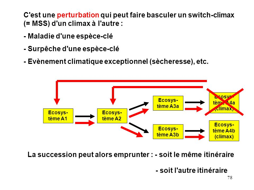 79 Environ- mental gradient Habitat A Deterministic Succession: Climax A Deterministic Succession: Climax B Habitat B Habitat A Deterministic Succession: Climax A Deterministic Succession: Climax B Habitat B Climax A Climax B Non deterministic succession Environ- mental gradient The disturbance model From Knowlton, 2004.