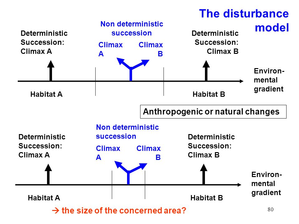 80 Environ- mental gradient Habitat A Deterministic Succession: Climax A Deterministic Succession: Climax B Habitat B Climax A Climax B Non deterministic succession Environ- mental gradient Habitat A Deterministic Succession: Climax A Deterministic Succession: Climax B Habitat B Climax A Climax B Non deterministic succession Anthropogenic or natural changes the size of the concerned area.