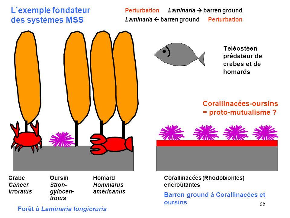 86 Forêt à Laminaria longicruris Crabe Cancer irroratus Oursin Stron- gylocen- trotus Homard Hommarus americanus Téléostéen prédateur de crabes et de homards Corallinacées-oursins = proto-mutualisme .