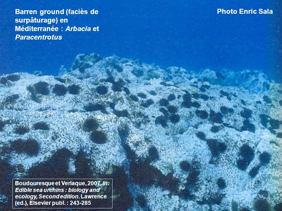 89 Barren ground (faciès de surpâturage) en Méditerranée : Arbacia et Paracentrotus Photo Enric Sala Boudouresque et Verlaque, 2007. in: Edible sea ur