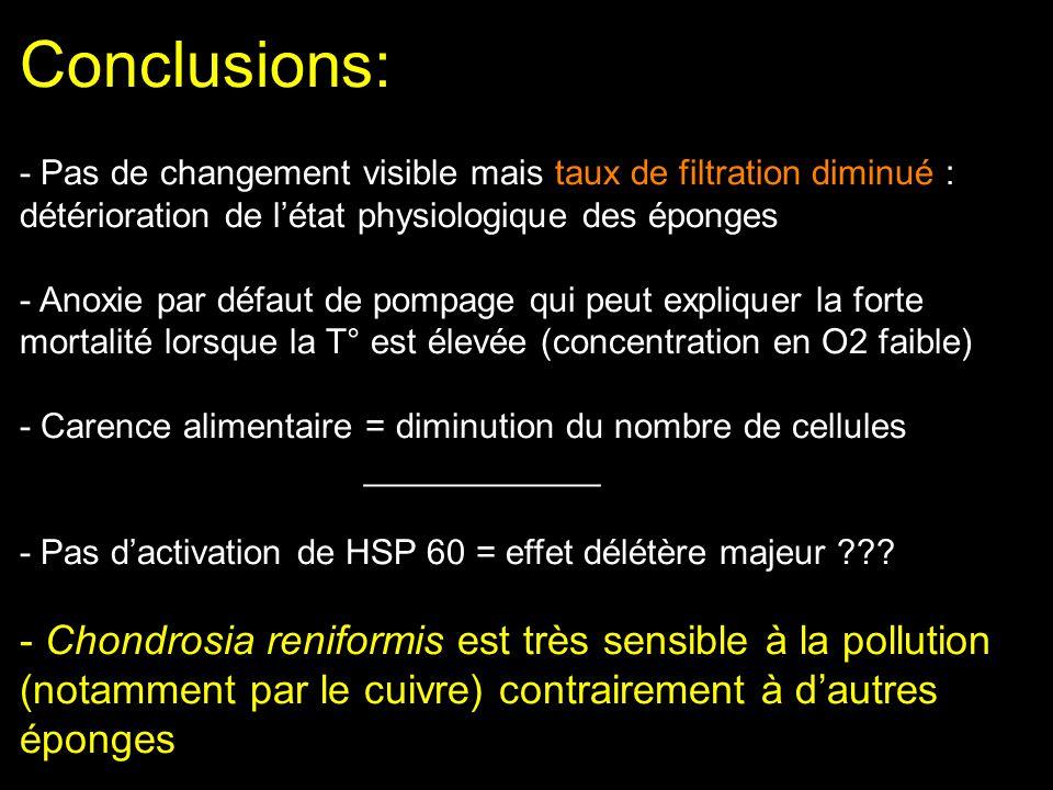 Conclusions: - Pas de changement visible mais taux de filtration diminué : détérioration de létat physiologique des éponges - Anoxie par défaut de pom