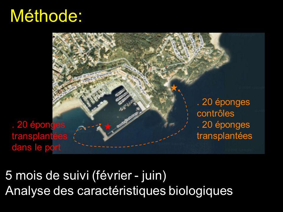 5 mois de suivi (février - juin) Analyse des caractéristiques biologiques Méthode:. 20 éponges contrôles. 20 éponges transplantées. 20 éponges transpl