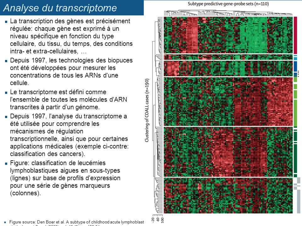 Analyse du transcriptome Figure source: Den Boer et al.