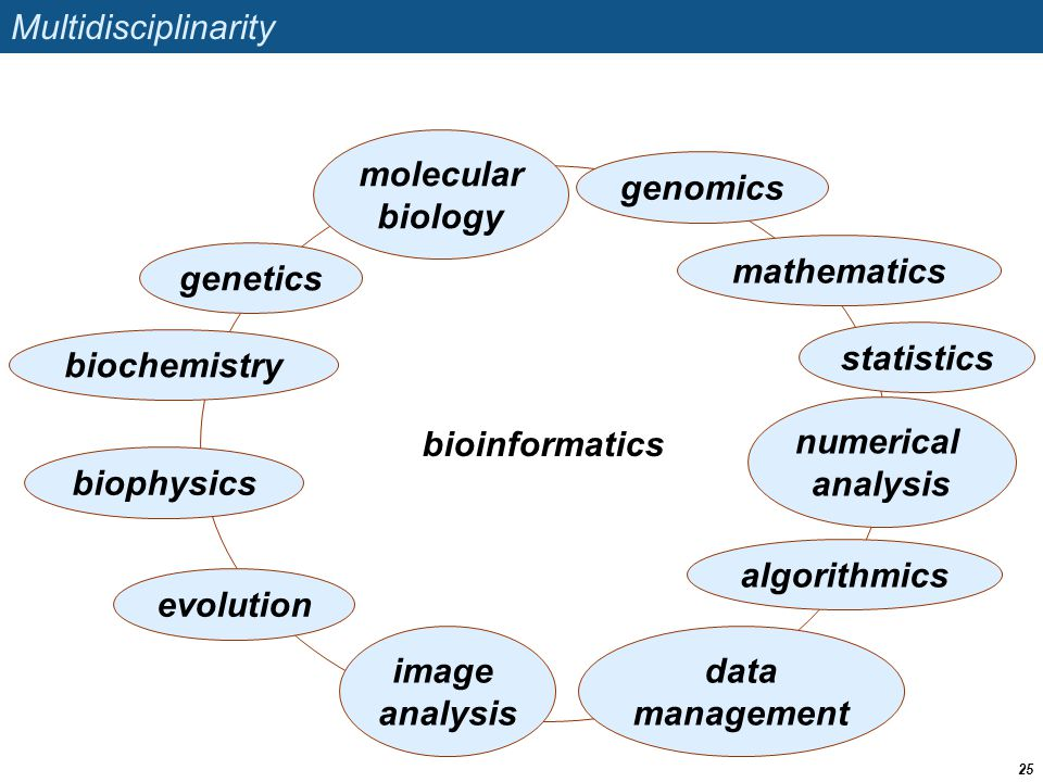 bioinformatics Multidisciplinarity 25 biochemistry molecular biology algorithmics statistics mathematics numerical analysis evolution genetics data management image analysis biophysics genomics