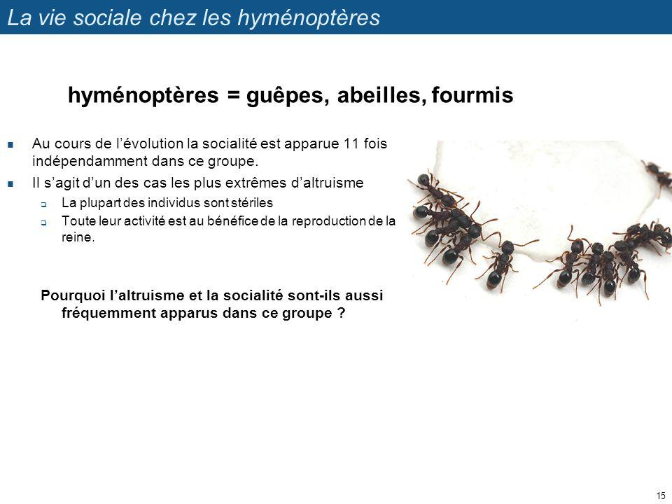 La vie sociale chez les hyménoptères Au cours de lévolution la socialité est apparue 11 fois indépendamment dans ce groupe. Il sagit dun des cas les p
