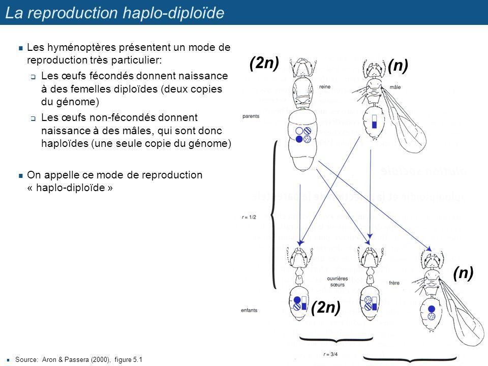 La reproduction haplo-diploïde Source: Aron & Passera (2000), figure 5.1 17 Les hyménoptères présentent un mode de reproduction très particulier: Les