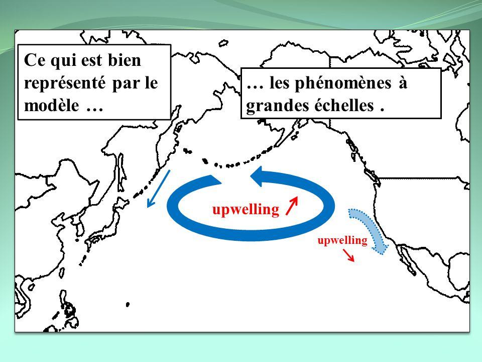 upwelling Ce qui est bien représenté par le modèle … … les phénomènes à grandes échelles.