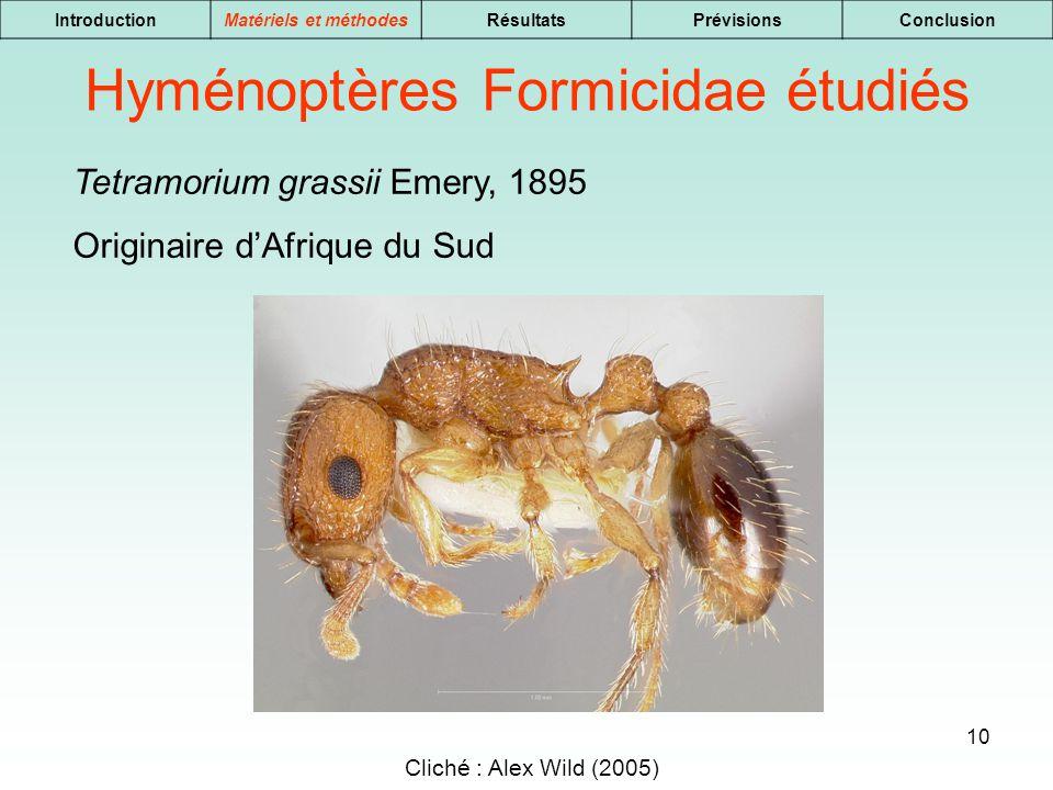 10 IntroductionMatériels et méthodesRésultatsPrévisionsConclusion Tetramorium grassii Emery, 1895 Originaire dAfrique du Sud Hyménoptères Formicidae é