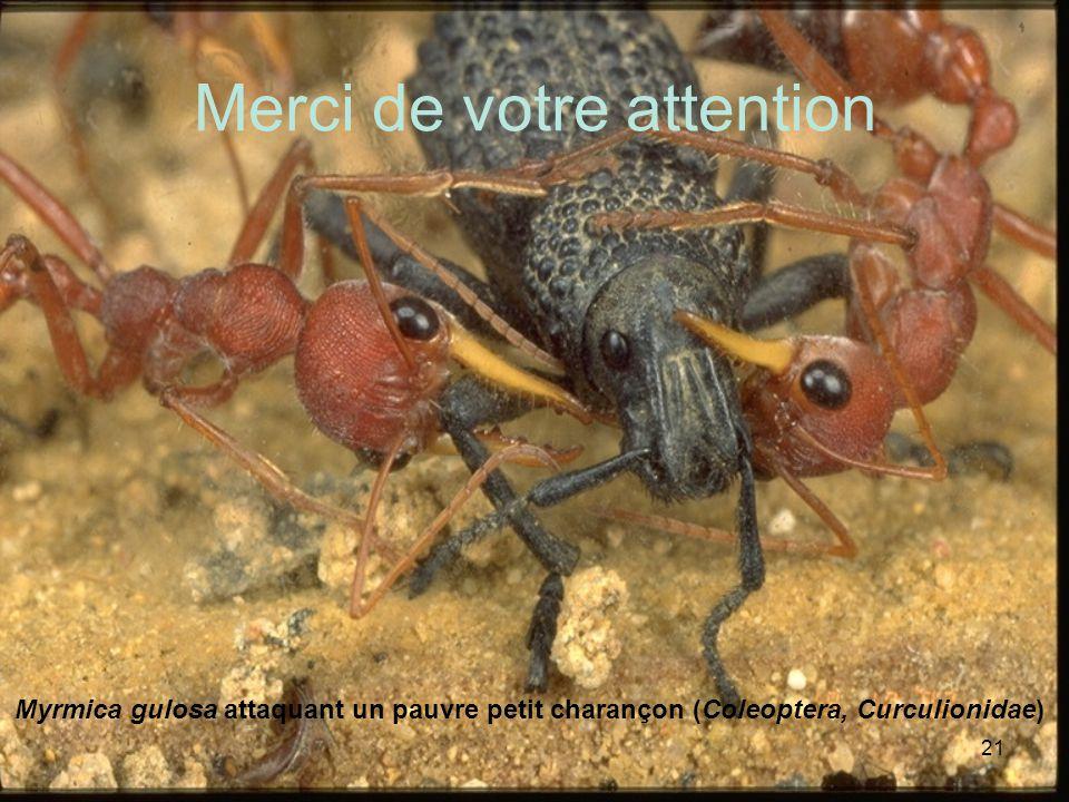 21 Merci de votre attention Myrmica gulosa attaquant un pauvre petit charançon (Coleoptera, Curculionidae)